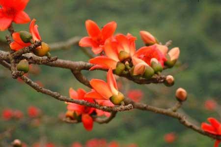 Hương Hoa Gạo - Dương Hướng
