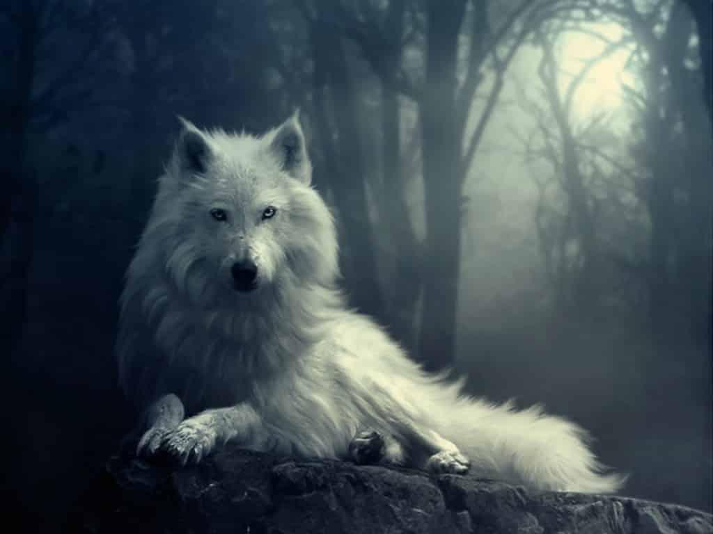 Hồn sói - Người Khăn Trắng