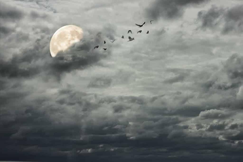 Truyện đêm khuya - Buổi tối định mệnh