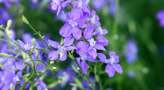 nghe-truyen-dem-khuya-sam-violet-online