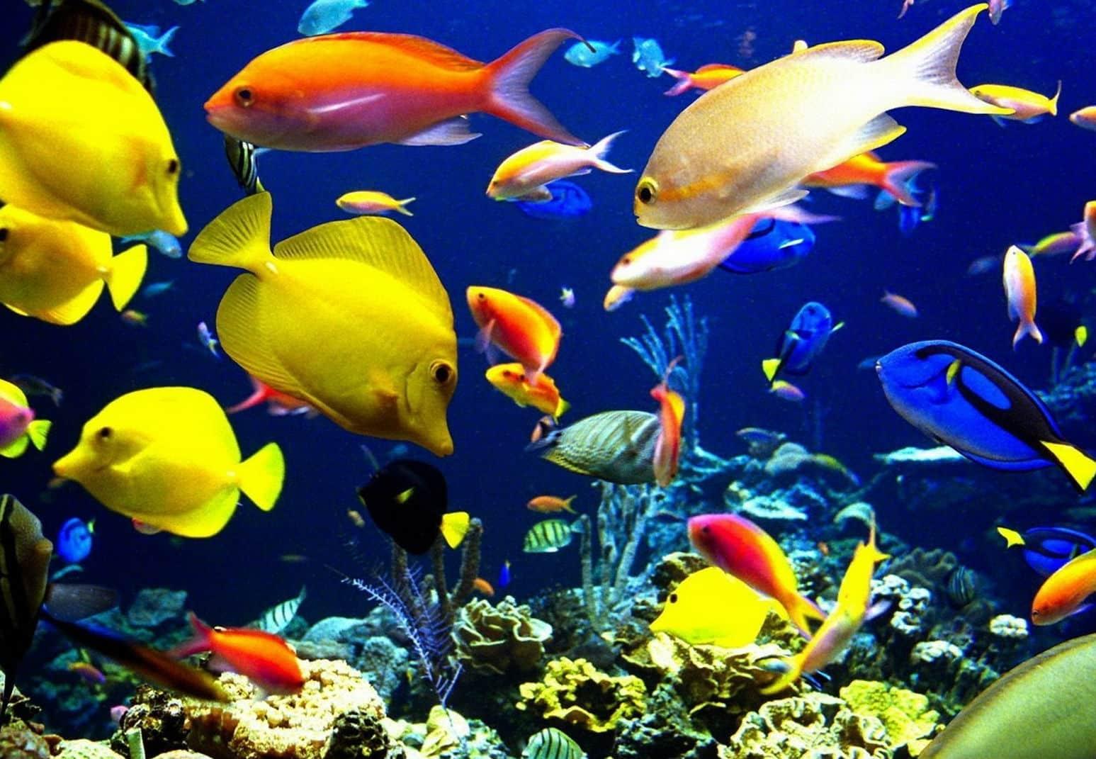 Cá Và Nước Mắt