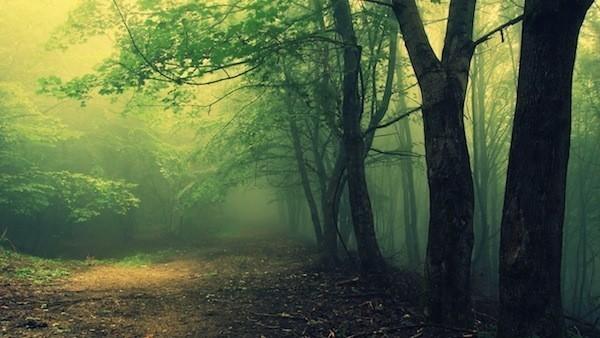 Đọc truyện đêm khuya  - Trái tim rừng - Hữu Tiến