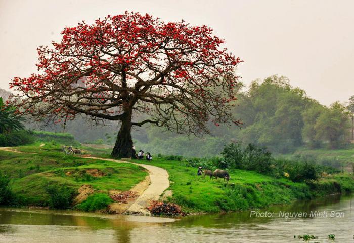 (Tản Văn) Bến Sông Hoa Gạo - Việt Nga