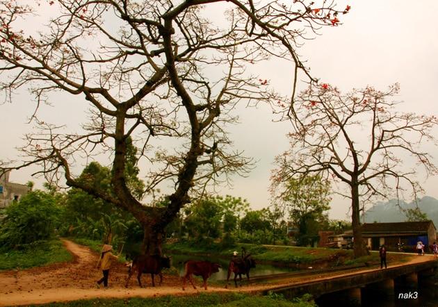 Hương Thôn Dã - Nguyễn Thị Kim Hòa