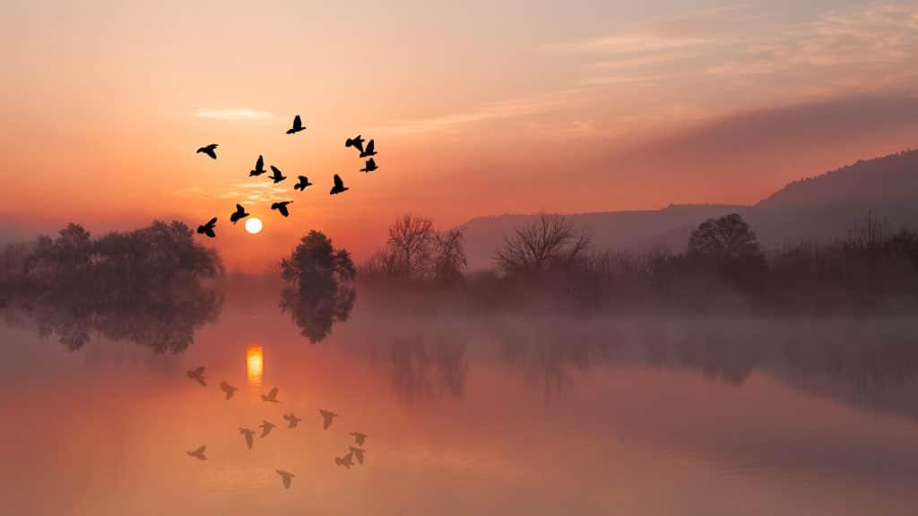 Con Chim Nam Về Rừng – Phan Đức Lộc