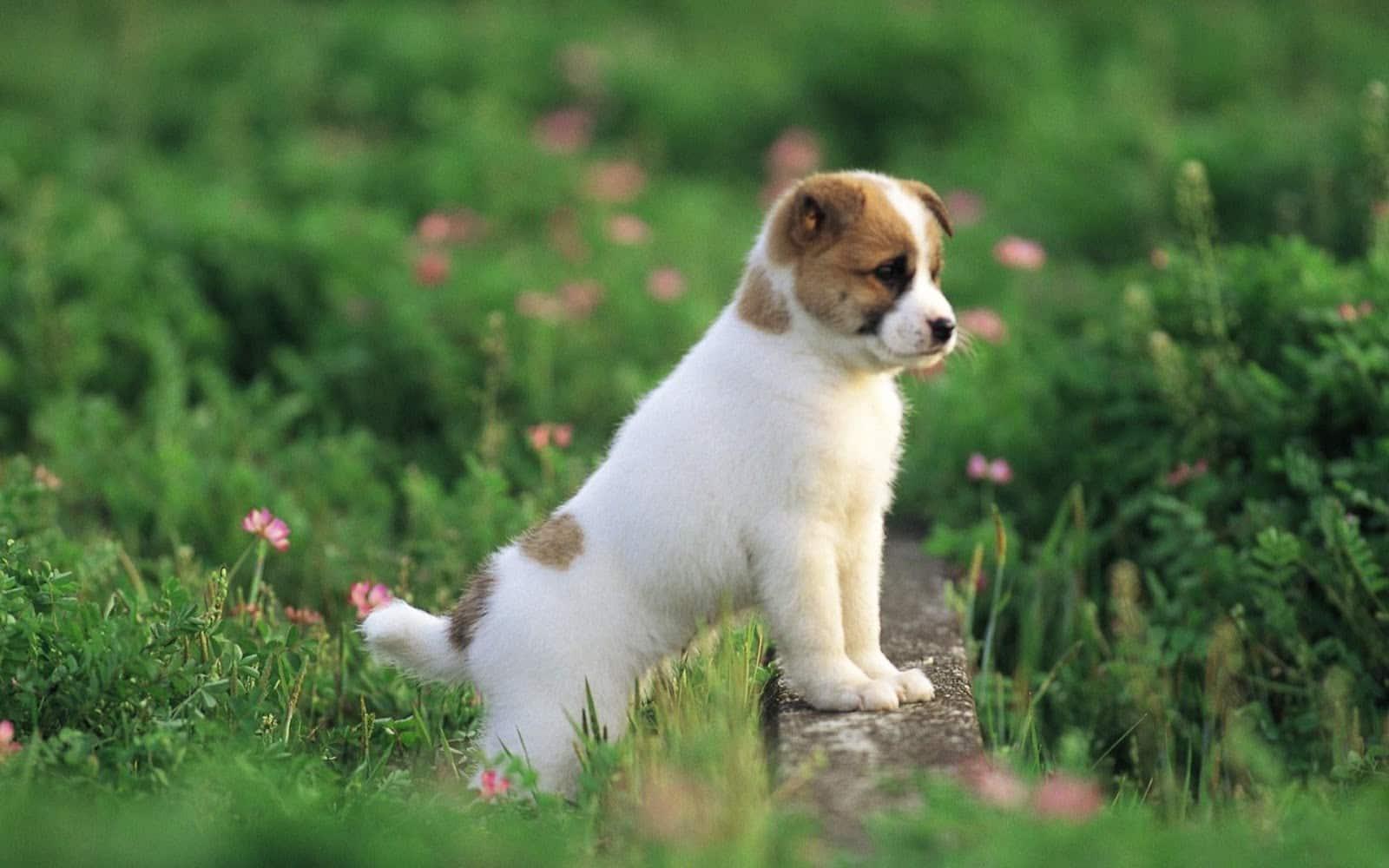 Con Chó Biết Nói – Đỗ Quang Vinh